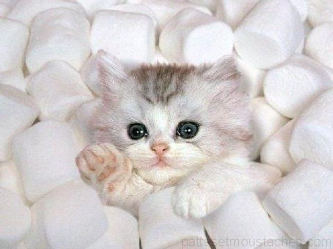 Chat mignon photos de nos animaux - Chaton trop chou ...
