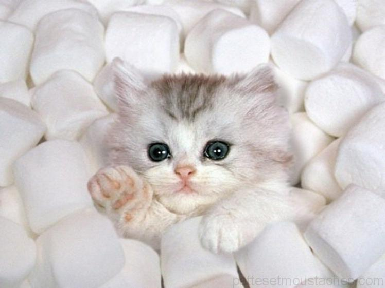 Photo chaton trop mignon photos de nos animaux - Photo chatons trop mignon ...