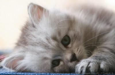 Photo de chaton a imprimer gratuit photos de nos animaux - Photo de violetta a imprimer gratuit ...