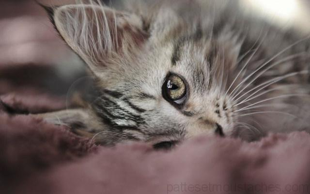 Photo de chat trop mignon photos de nos animaux - Images de chats trop mignons ...