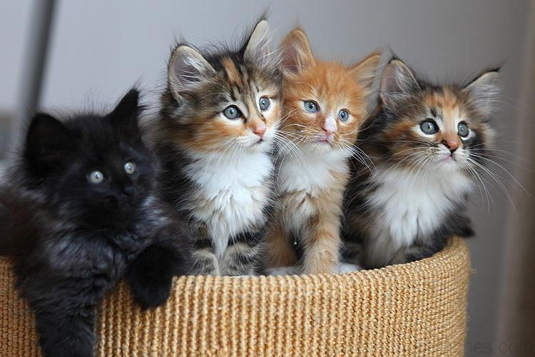 Chats mignons photos de nos animaux - Photo chatons trop mignon ...