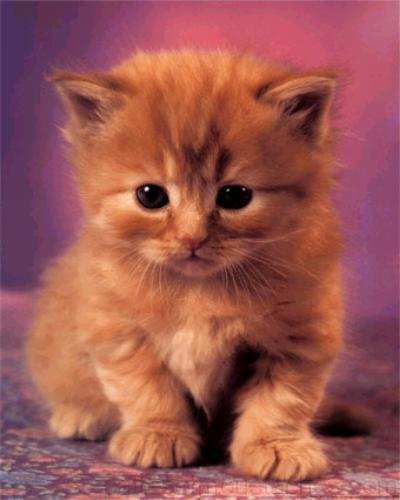 Photo de chaton trop mignon photos de nos animaux - Photo chatons trop mignon ...