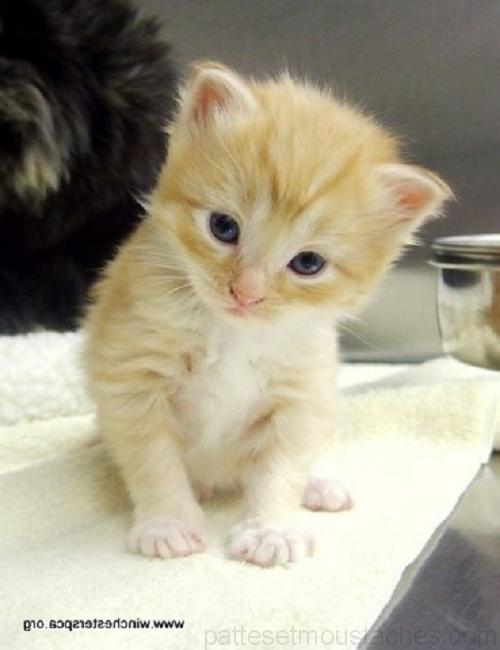 Photo de chatons trop mignon a imprimer photos de nos animaux - Photo de chaton trop mignon ...