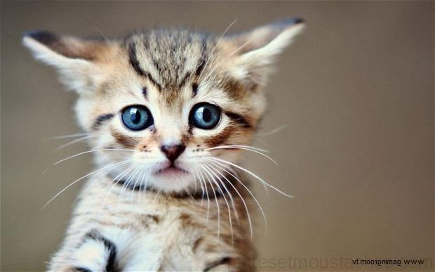 Photo de chaton trop mignon a imprimer photos de nos animaux - Photo chatons trop mignon ...