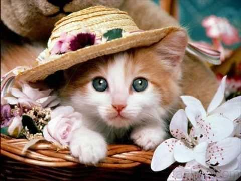Image chatons mignons