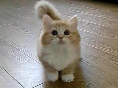 Video Bebe Chat Trop Mignon Photos De Nos Animaux