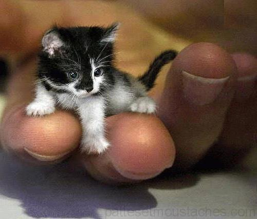 Video chaton mignon photos de nos animaux - Photo de chaton trop mignon ...